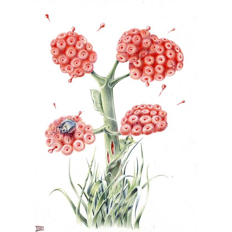 Fleurs imaginaire